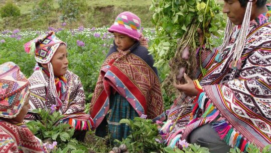 Farmers sharing potatoes in the Potato Park near Pisaq (Sacred Valley), Peru
