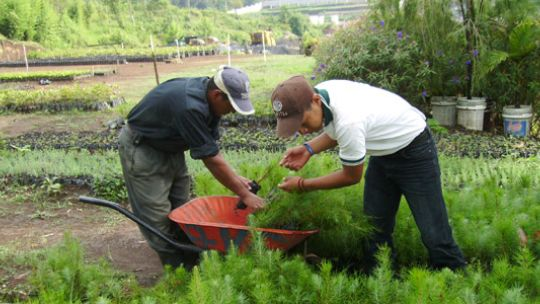 Reforestation program in Guatemala (Photo: Enrique Varahona)