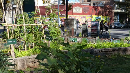 Vegetable garden in the middle of a city street