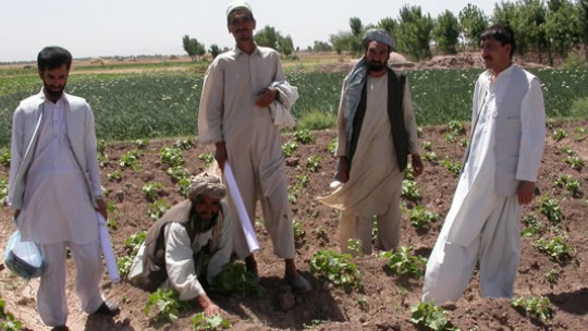 Farmers and extension workers jointly assessing an okra field in Balkh Province, Northern Afghanistan