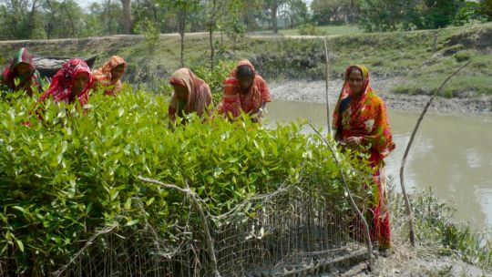 CBA5 participants visited Char Kukri-Mukri island on the southeast coast.Here women tend mangrove seedlings destined to provide a barrier against erosion (Photo: B. Koelle)