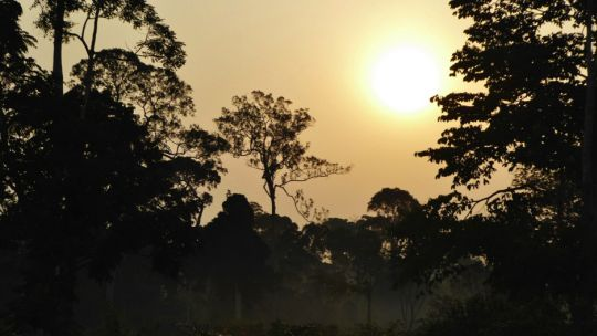 Cameroon's forests (Photo: Duncan Macqueen/IIED)