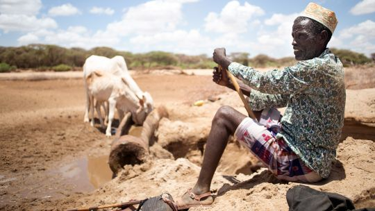 2017: pastoralists in Isiolo county in Kenya are digging for water in dried-up river beds. Agricultural insurance schemes can help pastoralists and farmers be more resilient to climate shocks (Photo: Denis Onyodi/KRCS)