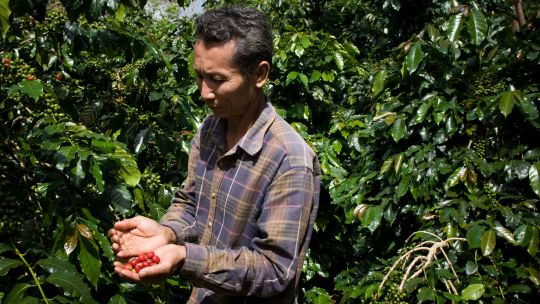 Somboun Saiborkeno farms coffee on his smallholding on the Bolaven Plateau in Laos. Smallholders in the region are being encouraged to grow high quality and organic coffee for export (Photo: Asian Development Bank)