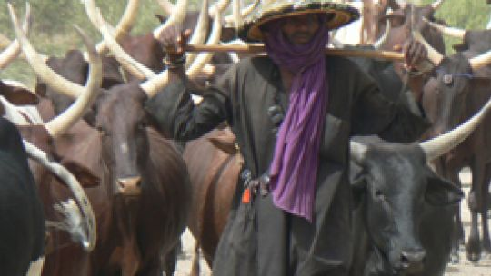 WoDaaBe pastoralist with his cattle
