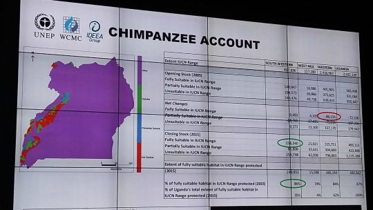The second forum on natural capital accounting for better policy heard about a case study on chimpanzee accounts. This photo shows an image of the presentation (Photo: Rosalind Goodrich/IIED)