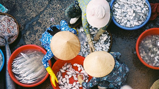 A fish market in Vĩnh Trường, Vietnam. More than 300 million people are directly or indirectly employed by the fisheries sector, and must be addressed by the oceans SDG (Photo: Khánh Hmoong, Creative Commons, via Flickr)