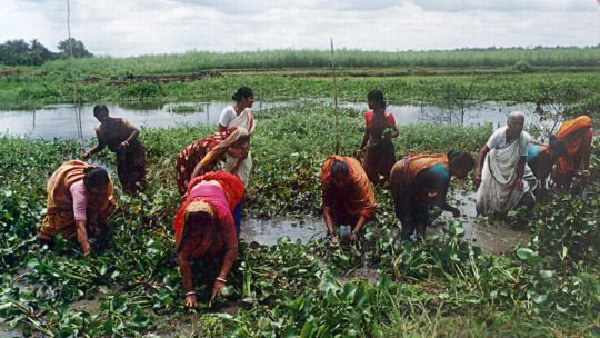 Women doing maintenance work on a fish sanctuary in Bangladesh (Photo: Paul Thompson/Challenge Program on Water and Food, Creative Commons via Flickr)