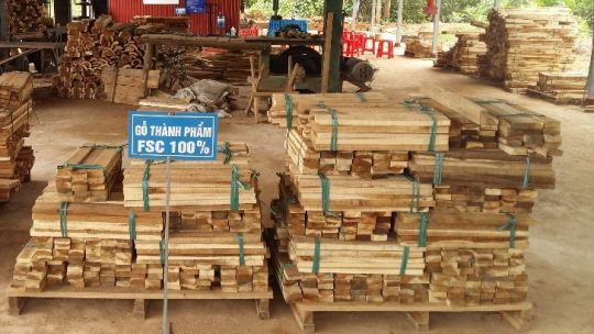 FFF support in Vietnam helped smallholders to establish FSC certified Acacia plantations, register a new Binh Minh cooperative, attract investment for a new sawmill, add value to products, diversify, and increase household incomes (Photo: Vietnam National Farmers Union )