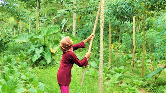 Woman in a forest holds a tree branch towards another tree