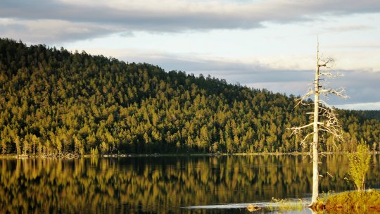 A large forest is reflected in the water in the foreground