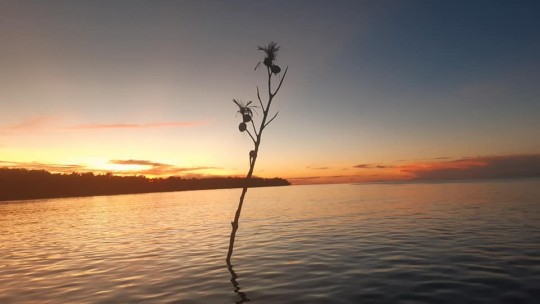 Tree branch stuck in the sea.
