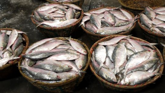 Bowls full of hilsa placed on a table