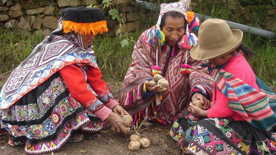 Three woman crouch near the floor examining potatoes