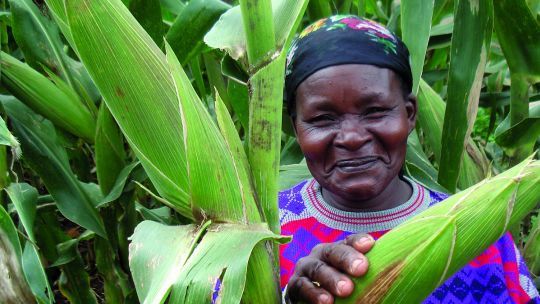 A Kenyan woman's maize crop which is a favoured food for elephants (Photo: Bread for the World, Creative Commons, via Flickr)