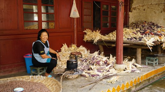 A woman surrounded by maize