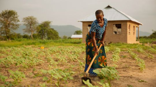 A farmer hoes her land in Tanzania