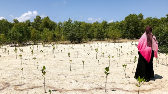 A woman stands to the side of a barren area through which small shoots of a mangrove forest can be seen