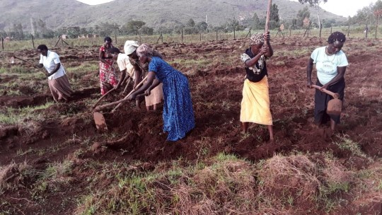 Women hoeing a field.
