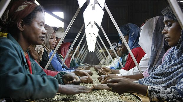 Ethiopian women sort coffee beans at a long table. Gender equality and equity are vital components of sustainable development (Photo: Wikipedia Commons)