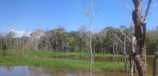 A photo of the Amazon rainforest, with water in the foreground. Sixty per cent of the rainforest, which covers 2,100,000 square miles, is located in Brazil (Photo: www.bbmexplorer.com, Creative Commons, via Flickr)