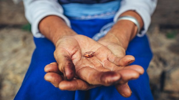 Hands holding a seed